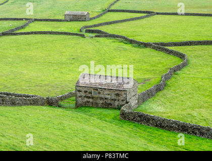 Field barns built to house overwintering cattle at Gunnerside Bottoms in upper Swaledale in the Yorkshire Dlaes UK - Stock Photo