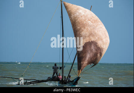 Outrigger sailing fishing boat surfing waves back to the beach in Negombo, Sri Lanka - Stock Photo