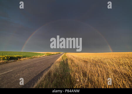Wheat fields in sunny summer day after rain and rainbow behind - Stock Photo