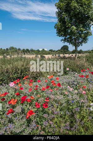 Wild flowers growing alongside Bromwich Parade, a tranquil public walkway in central Worcester, Worcestershire, West Midlands UK - Stock Photo
