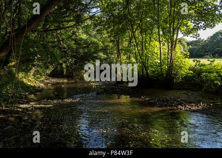 stream tributary, river Teign,course, creek, rill,rivulet run runnel,watercourse,Dartmoor,pour, flow, run, gush, cascade, stream, course, spout, jet, - Stock Photo