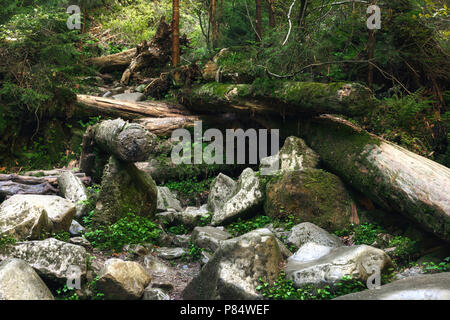 Fallen trees in a dense green forest. - Stock Photo