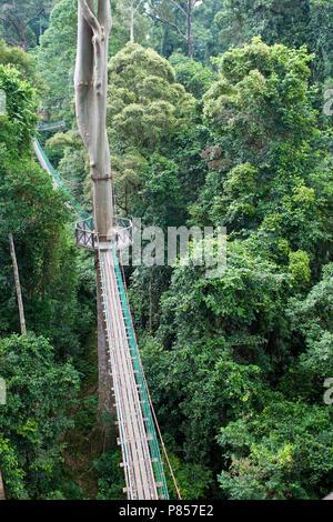 Canopy Walk Danum Valley Borneo - Stock Photo