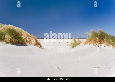 View on beach and sea between dunes grown with Marram grass under a blue sky - Stock Photo