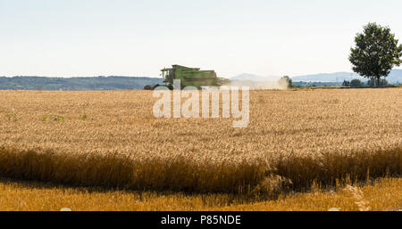 During the harvest, the combine mows the ripe wheat in the field. - Stock Photo