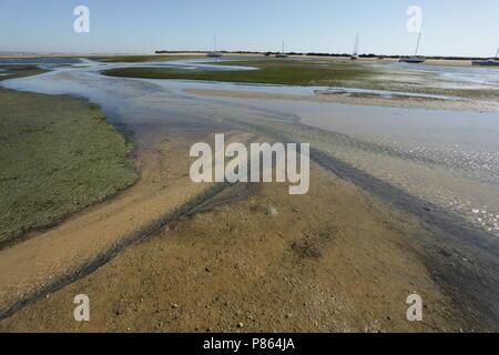 Ria Formosa lagoon is een rust- en foerageergebied voor trekvogels; Ria Formosa lagoon is a important stop over site for migrating birds - Stock Photo