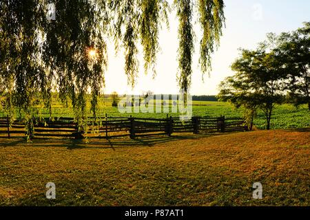 Sun shining through willow branches at twilight as sun goes down with cornfield in the background and a rail fence with some locust trees - Stock Photo