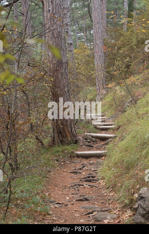 stairs on the trail in the forest - Stock Photo