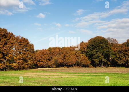 Bos in Het Gooi in het najaar; Forest at Het Gooi in autumn - Stock Photo
