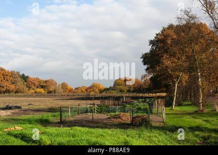 Moestuin in Het Gooi in de herfst; Vegetable garden at Het Gooi in autumn - Stock Photo