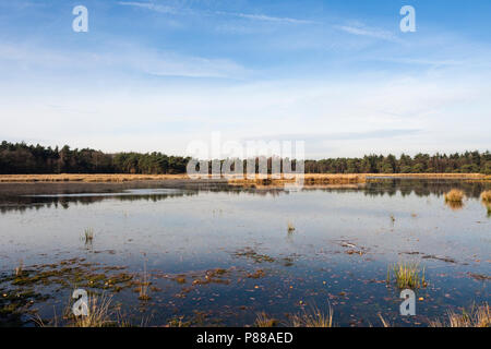 Uitzicht over plas in Het Gooi in de herfst; Overview of lake at Het Gooi in autumn - Stock Photo