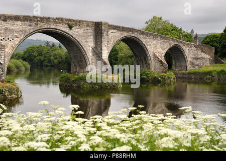 Medieval stone arches of Old Stirling Bridge over the River Forth with Queen Annes Lace on riverbank and Wallace Monument Stirling Scotland UK - Stock Photo