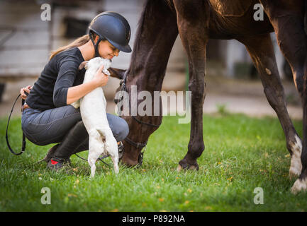 Young pretty girl preparing horse for ride and petting jack russel terrier - Stock Photo