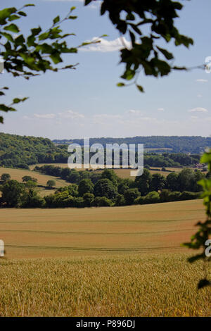 Portrait View Of Cornfield and Woodland - Stock Photo