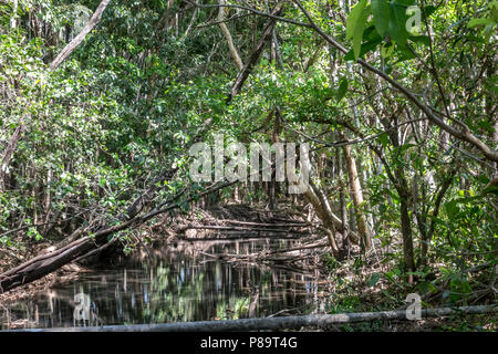 Monsoon forest and stream at Howard Springs Nature Park, Darwin, Northern Territory, Australia - Stock Photo