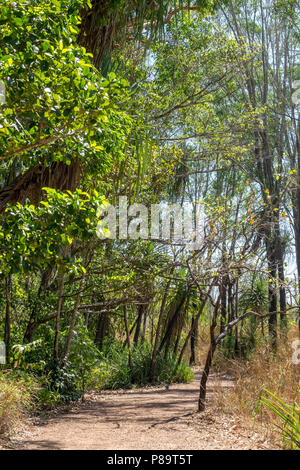 Monsoon forest at Howard Springs Nature Park, Darwin, Northern Territory, Australia - Stock Photo