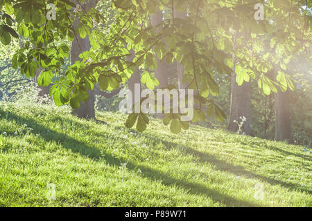 Chestnut trees in the park in sun rays - Stock Photo