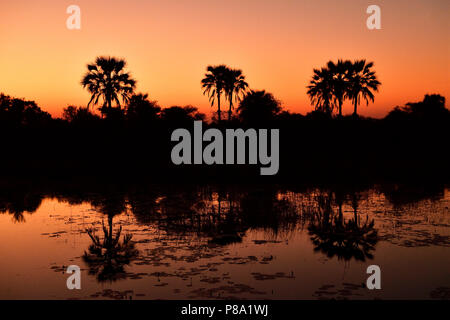 Red sunset, palm trees reflected in the water, Okavango Delta, Botswana - Stock Photo