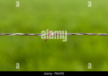 Old, Rusted Barbed Wire, isolated. - Stock Photo