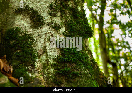 Moss on the tree in the forest - Stock Photo