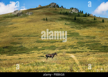 horse grazing on mountain meadow in Altai, Russia - Stock Photo