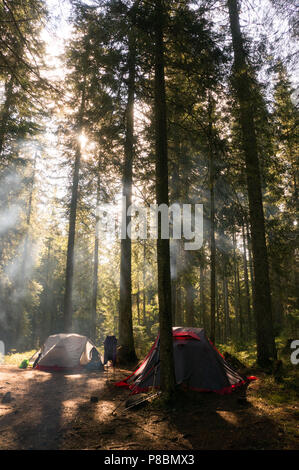 camping at trees in beautiful forest with back light - Stock Photo