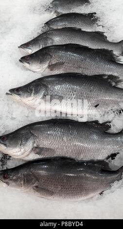 beautiful picture of Barramundi (Lates calcarifer) in Thai market - Stock Photo