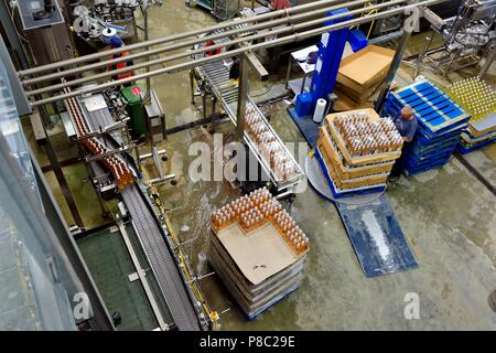 Man stacking cases on a pallet turntable, Healeys Cornish Cyder Farm,Penhallow, Truro,Cornwall,England,UK - Stock Photo