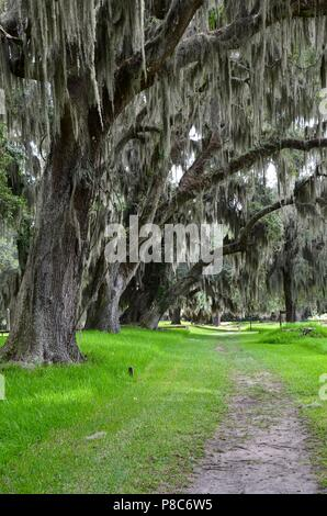 Old oak trees with Spanish Moss on St. Simons Island Georgia, Fort Frederica, national monument, archaeological, historic site, ruins, summer - Stock Photo