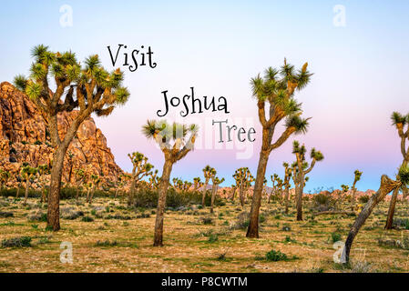 Travel Concept. Photograph of Joshua Tree National Park.  California, USA - Stock Photo