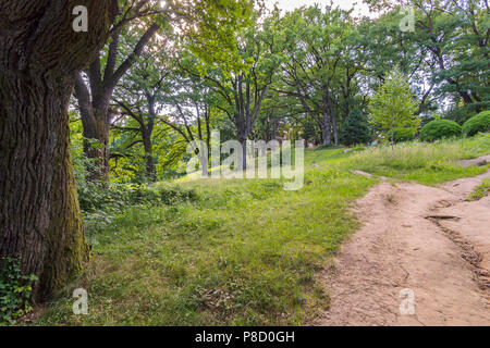 A broken dirt road running amidst the green grass with growing large trees with many branches in the park on the edge of the city. . For your design - Stock Photo