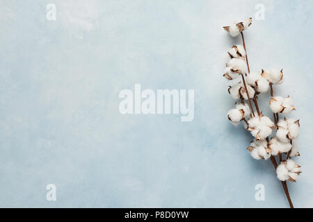 Flat lay of feminine light blue background with branch of artificial cotton flower. Can be greeting card and design element. Top view, copy space. - Stock Photo