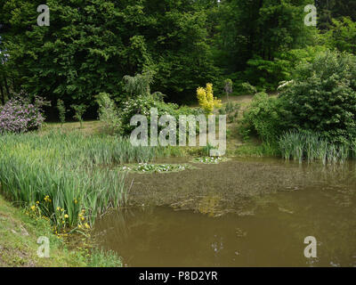 A lush bush of flowers growing on the shore of a small lake with water lilies near the shore and the trees reflected in the water. . For your design - Stock Photo