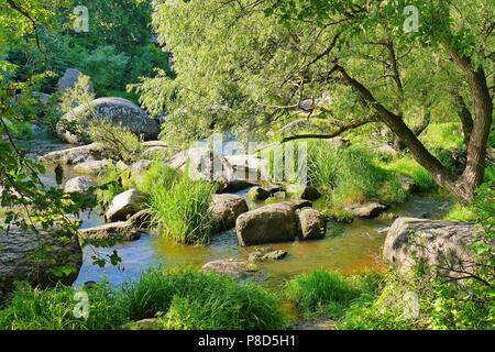 A small rapid river, flowing around stone boulders on its way against the backdrop of green trees and bushes . For your design - Stock Photo