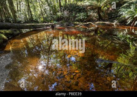 Botanical Creek, downstream from Hogarth Falls near Strahan, West coast Tasmania - Stock Photo