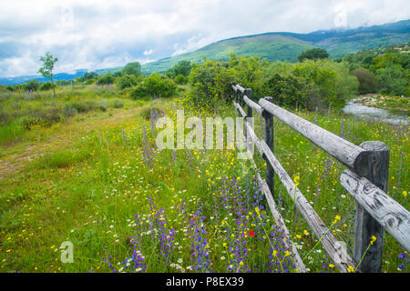 Spring landscape. Sierra de Guadarrama National Park, Madrid province, Spain. - Stock Photo