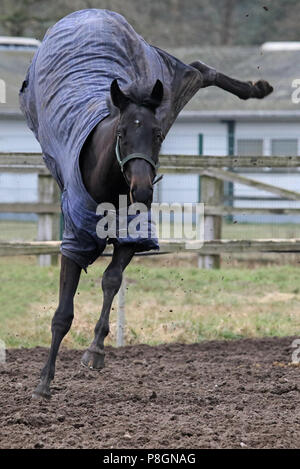 Neuenhagen, horse flies in winter covered on a sand paddock to the rear - Stock Photo