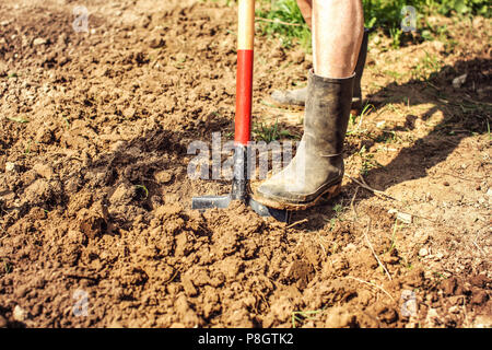 Detail on old man foot in dirty black rubber wellington boots, spading soil. Spring gardening. - Stock Photo