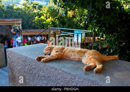 Looking for souvenirs I've noticed these lazy bones lying in the shadow of trees and having a nap - Stock Photo
