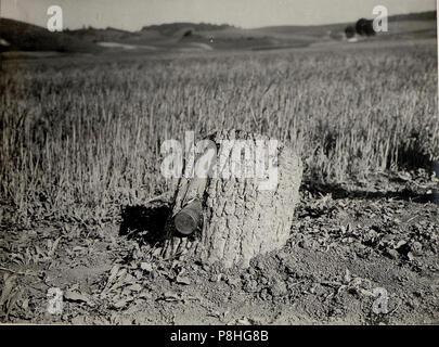 8cm Granate im Baumstamme (BildID 15529318). - Stock Photo