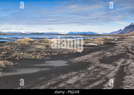 Grasses growing in black volcanic sand dunes at Vestrahorn, South Iceland. - Stock Photo