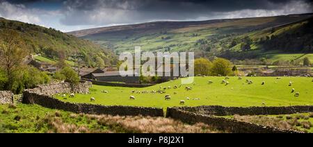 UK, England, Yorkshire, Swaledale, Gunnerside, Gunnerside sheep in field at edge of village, panoramic - Stock Photo