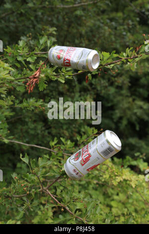Empty drinks cans left on branches of trees, UK. - Stock Photo