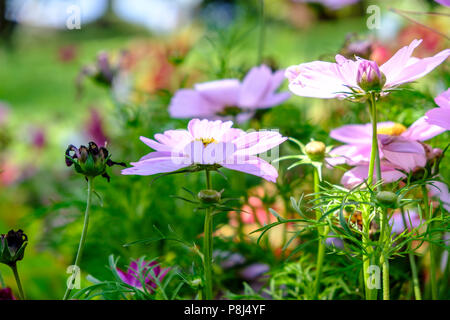 Beautiful soft colors of sun shining on wild flowers in summer with out of focus background - Stock Photo
