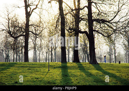 Lone jogger running through the trees in the winter sun in Hyde Park, London, England, UK - Stock Photo