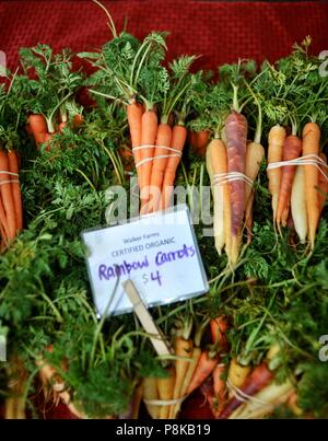 Tidy bundles of rainbow carrots (multicolored) at the Walker Farms farmstand for sale at farmers market in Savannah, Georgia, USA