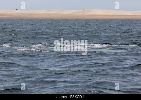 Gray whales in Bahia Magdalena, Mexico - Stock Photo