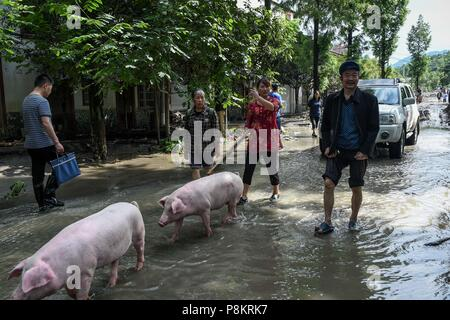 Beichuan, China's Sichuan Province. 12th July, 2018. Villagers retrieve their lost pigs after the flood in Chenjiaba Town of Beichuan County, southwest China's Sichuan Province, July 12, 2018. Lasting torrentials in the past days have caused severe flood in Santai, Beichuan and Pingwu counties in Sichuan. 595 flood-stranded people at Laochang Village of Chenjiaba Town have been evacuated. Credit: Chen Di/Xinhua/Alamy Live News - Stock Photo