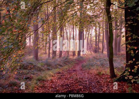 British Woodlands - Wonderful Light - Stock Photo