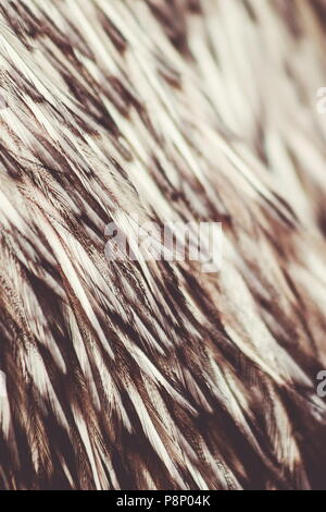 Close up abstract background image of Emu Feathers - Stock Photo